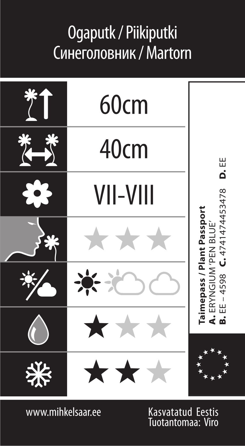 Etikett, Eryngium