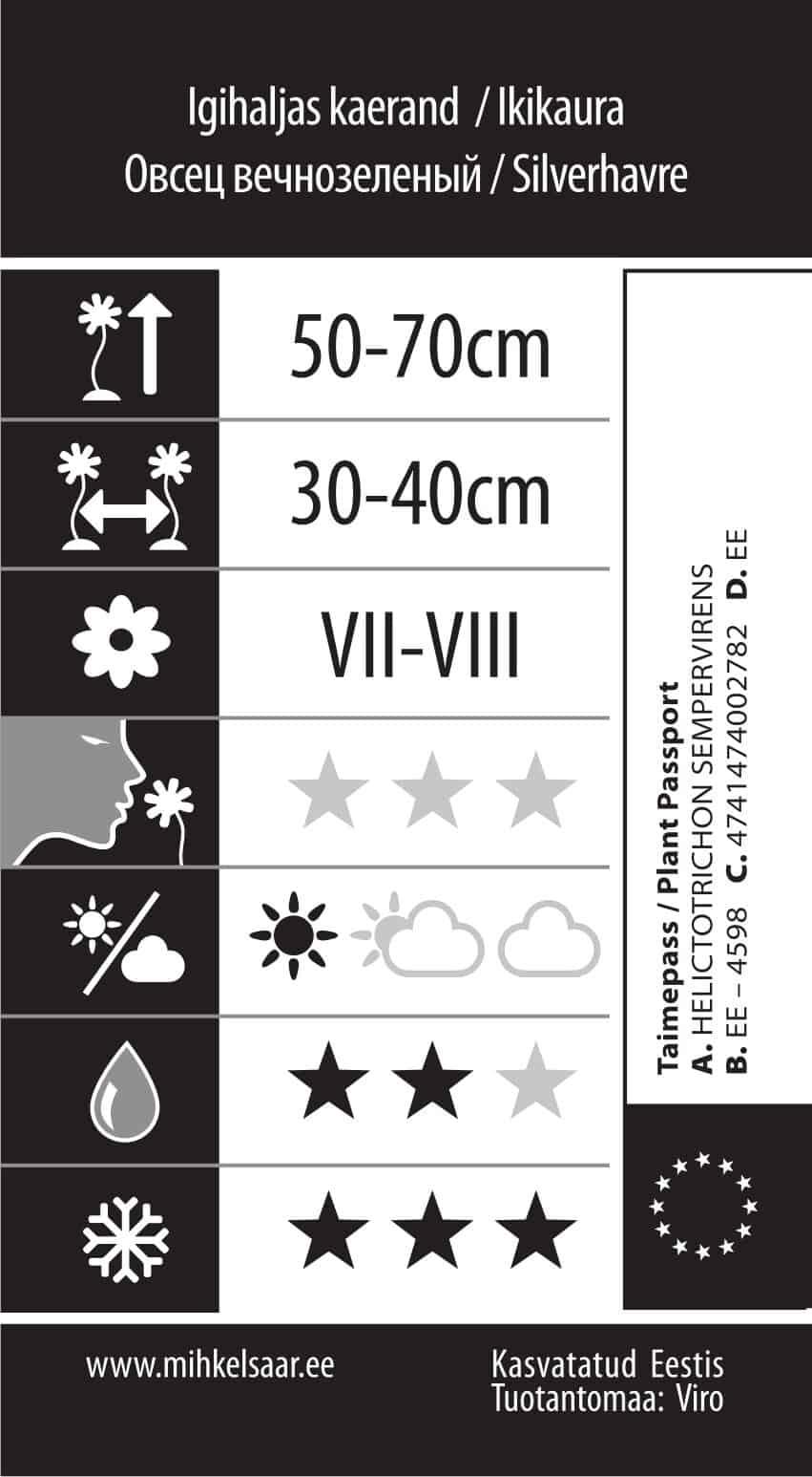 Etikett, Helictotrichon sempervirens