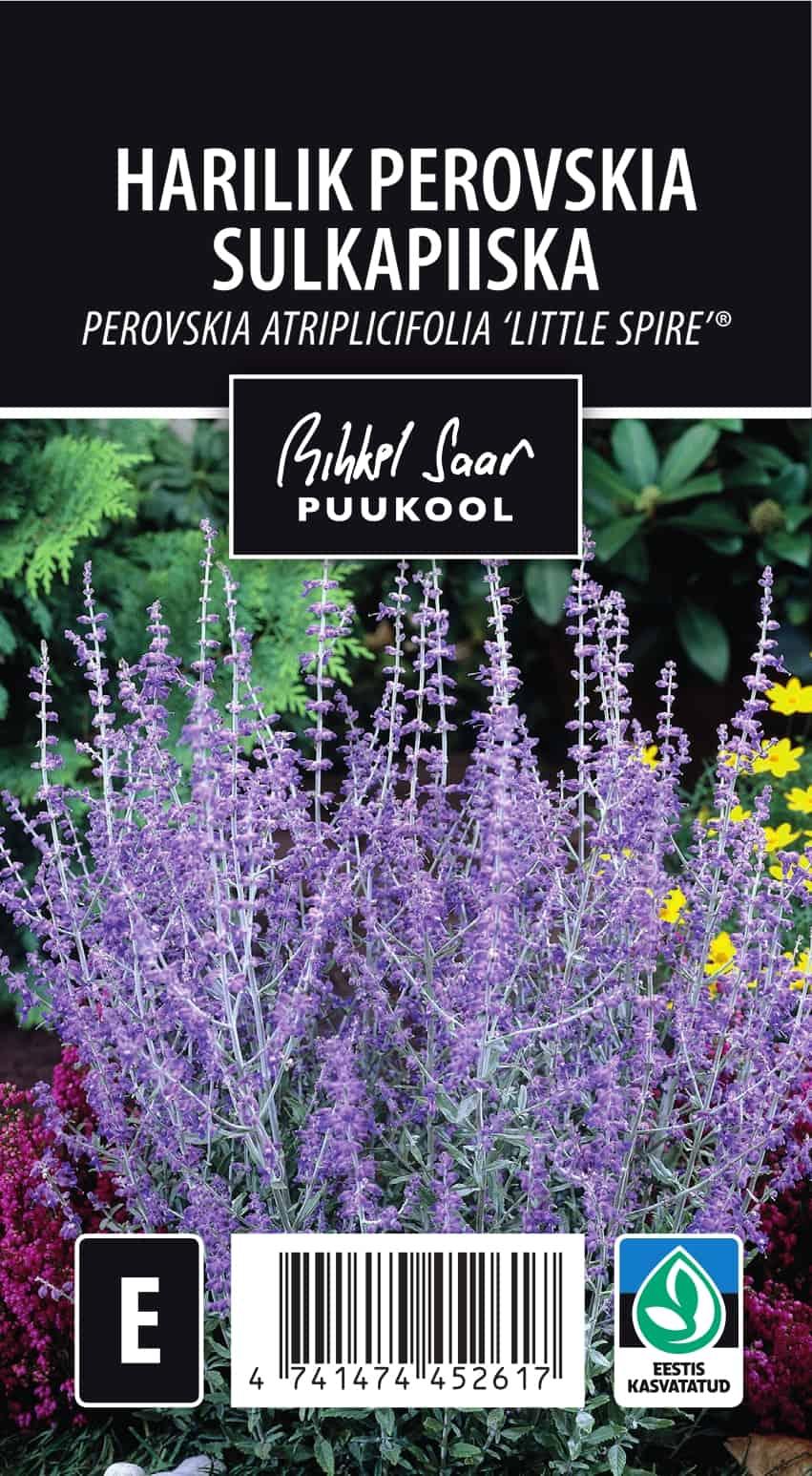 Etikett, Perovskia atriplicifolia