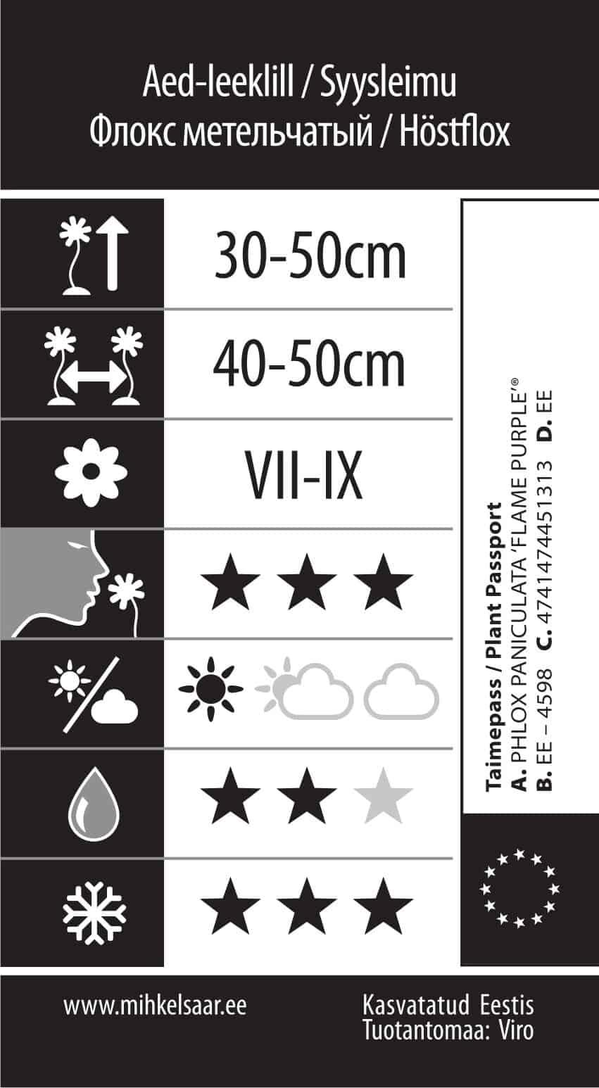 Etikett, Phlox paniculata