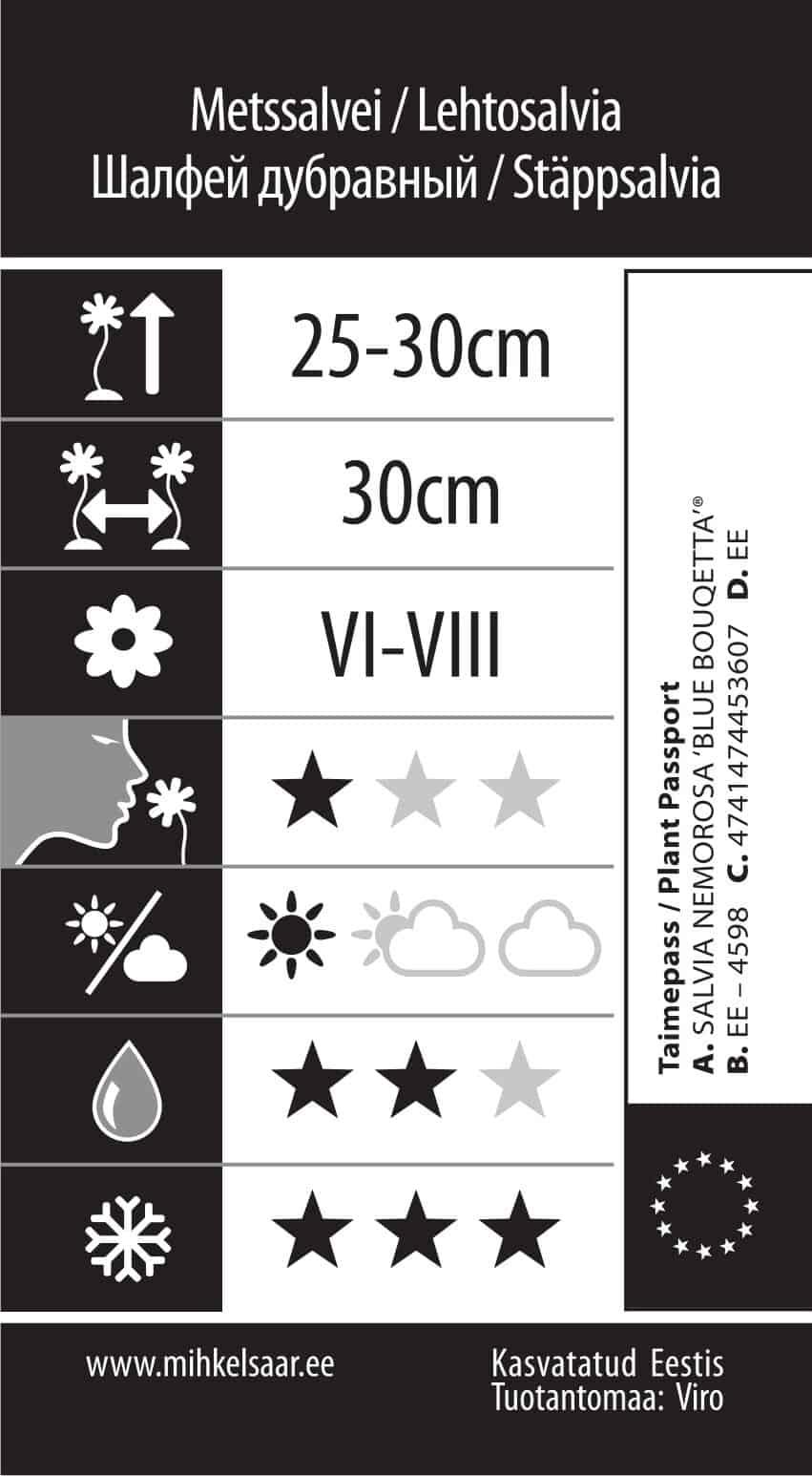Etikett, Salvia nemorosa